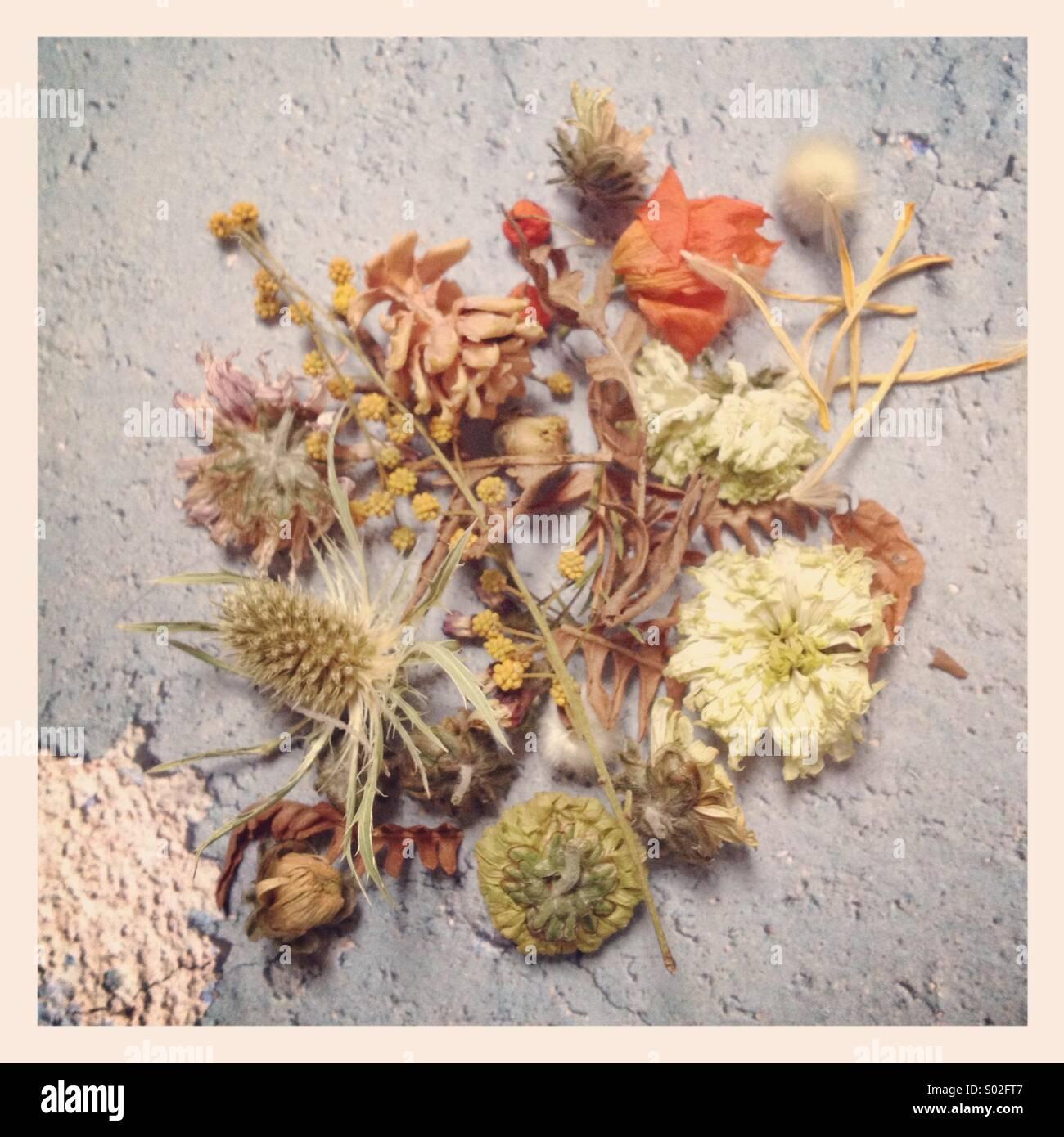 Fleurs séchées et en décomposition Photo Stock
