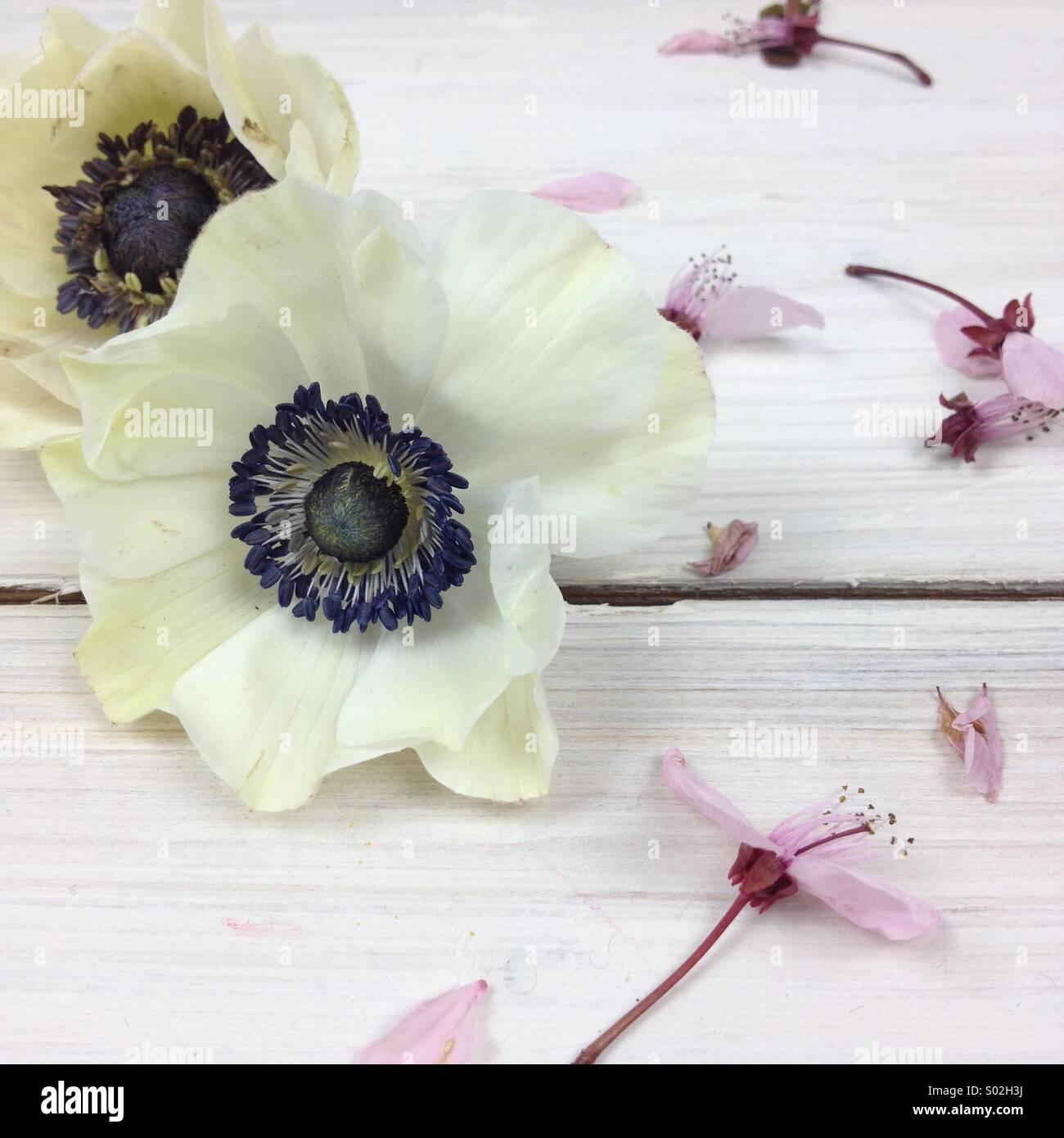 Fleurs de printemps Photo Stock