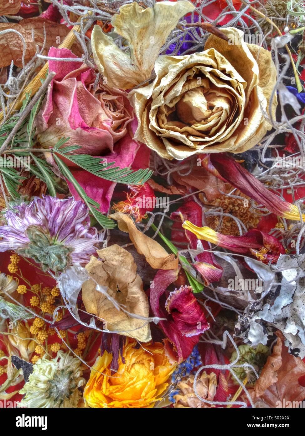 Les fleurs séchées abstract Photo Stock