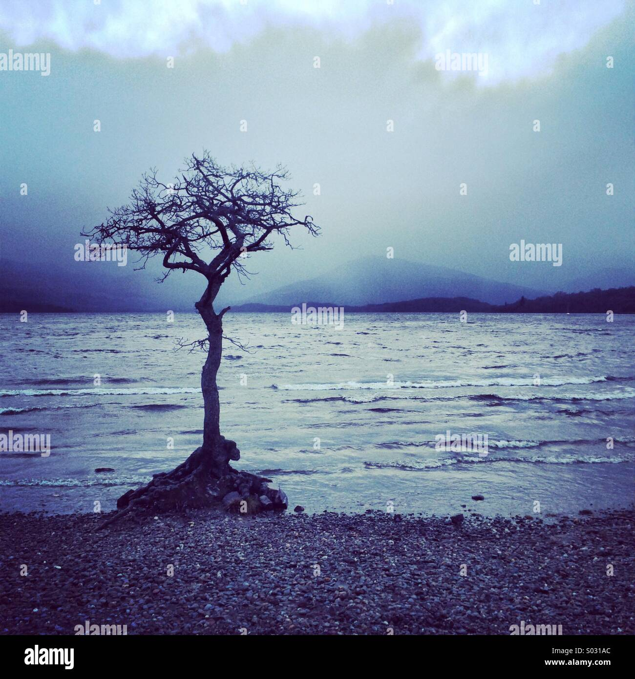 Milarrochy bay tree, Loch Lomond, Ecosse Photo Stock