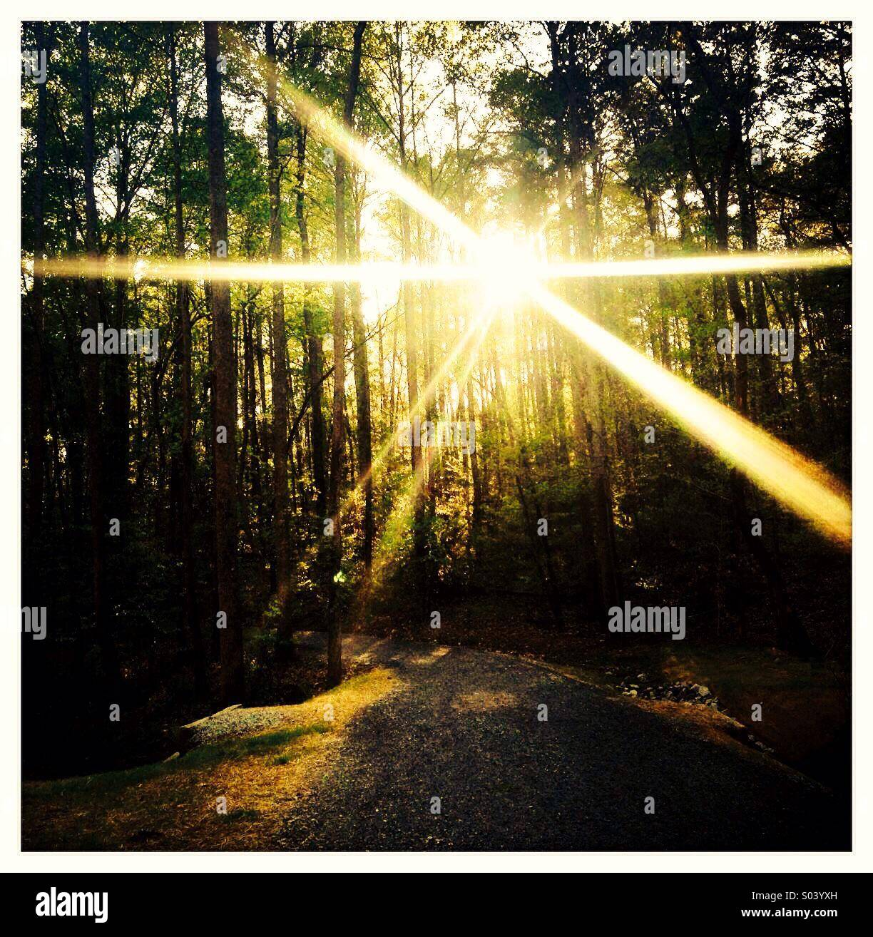 La lumière du soleil qui à travers des arbres dans les bois Photo Stock
