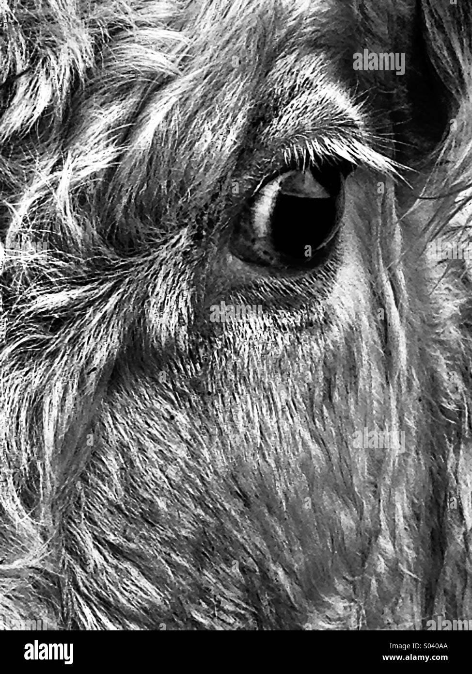 Texture animale Photo Stock