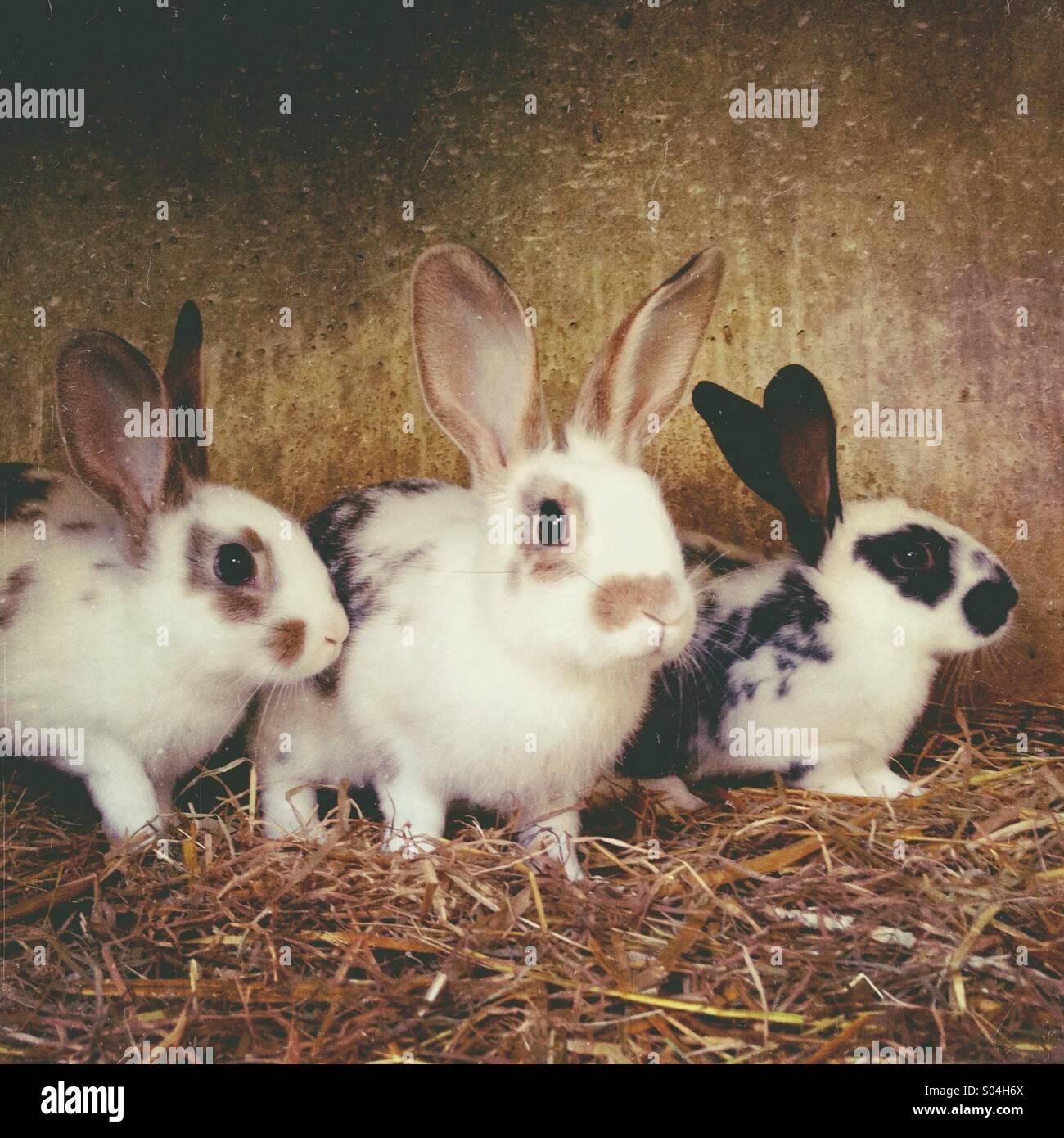 Les Jeunes lapins en cage Photo Stock