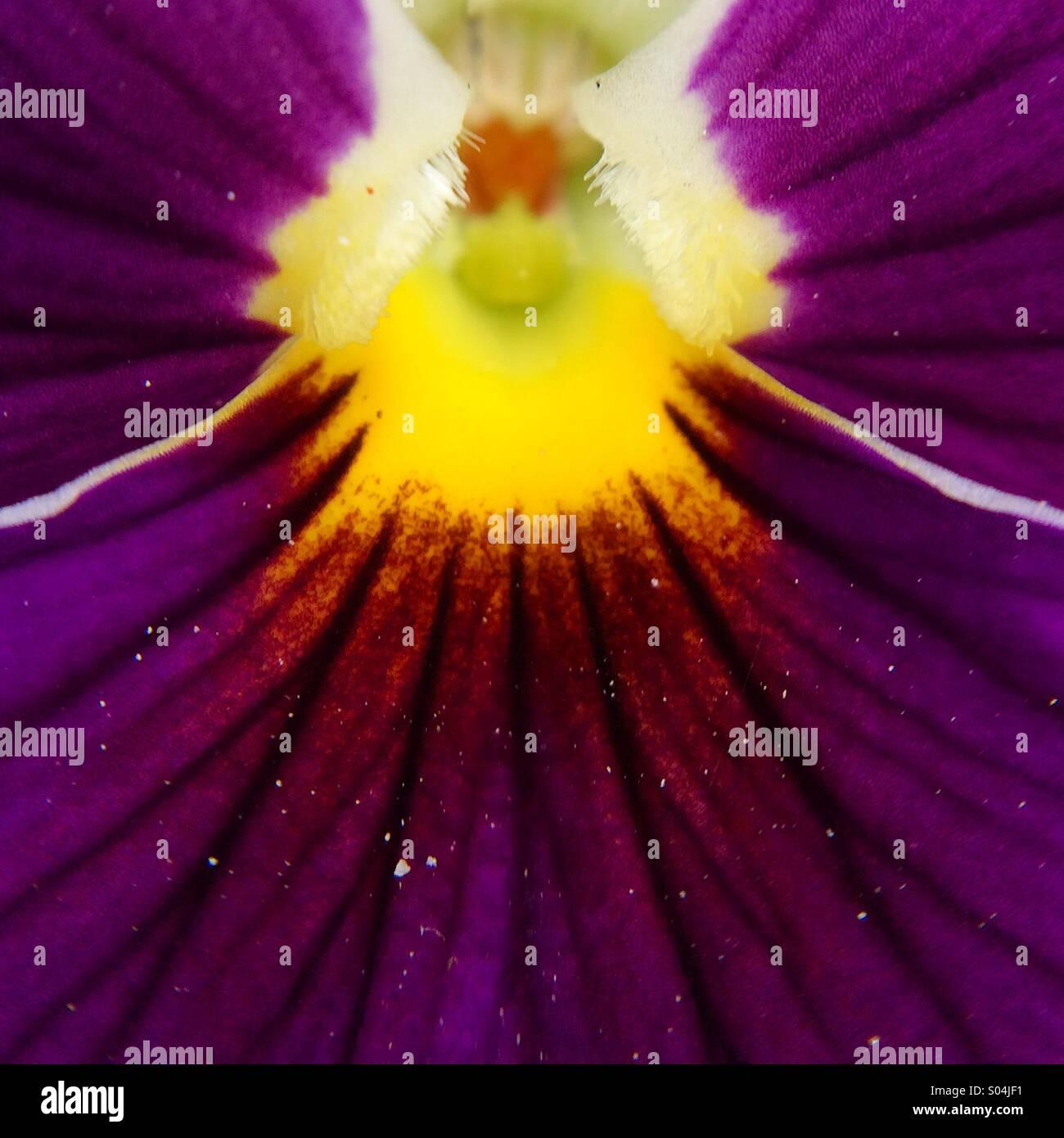 Macro d'une fleur pourpre Photo Stock