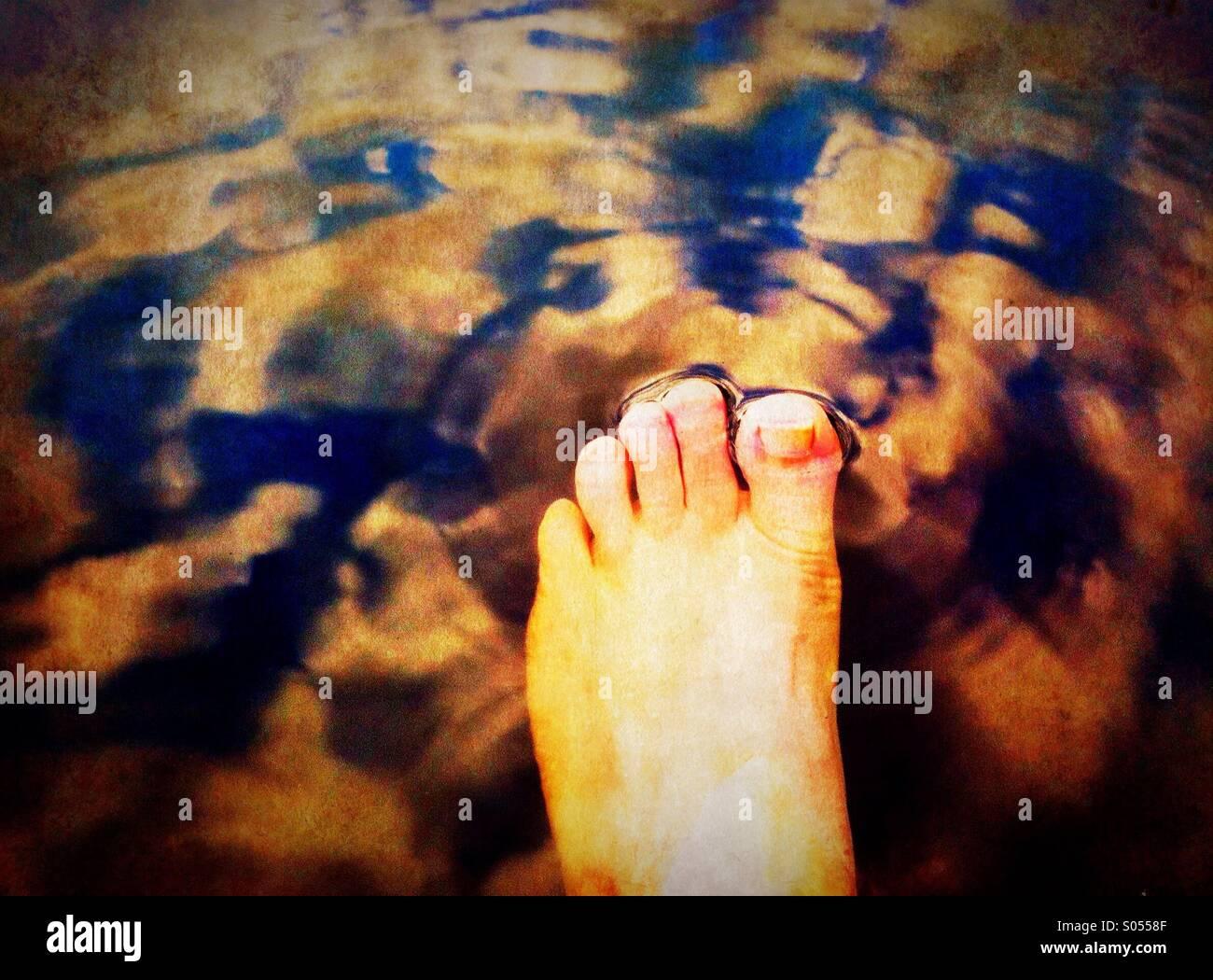 Pied plongeant à un lac Photo Stock