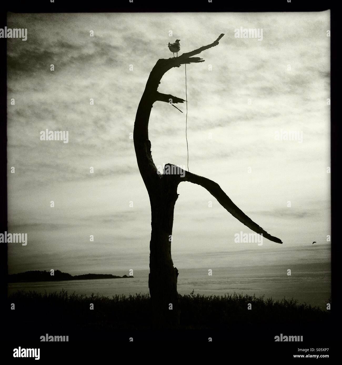 Seagull perché sur l'arbre mort 2 Photo Stock