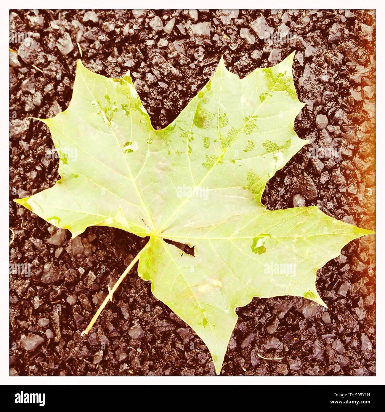 Fallen Leaf avec des gouttelettes de pluie Photo Stock