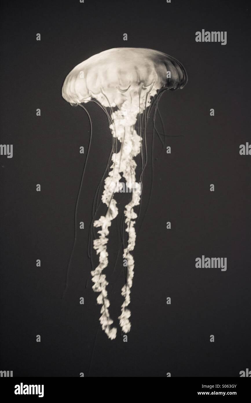 X-ray vision Photo Stock