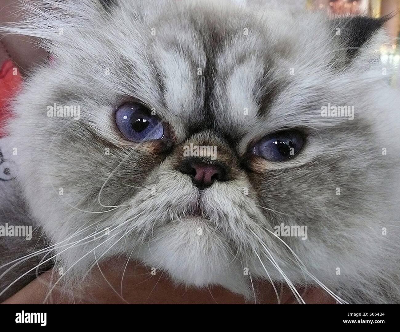 Cat face close-up Photo Stock