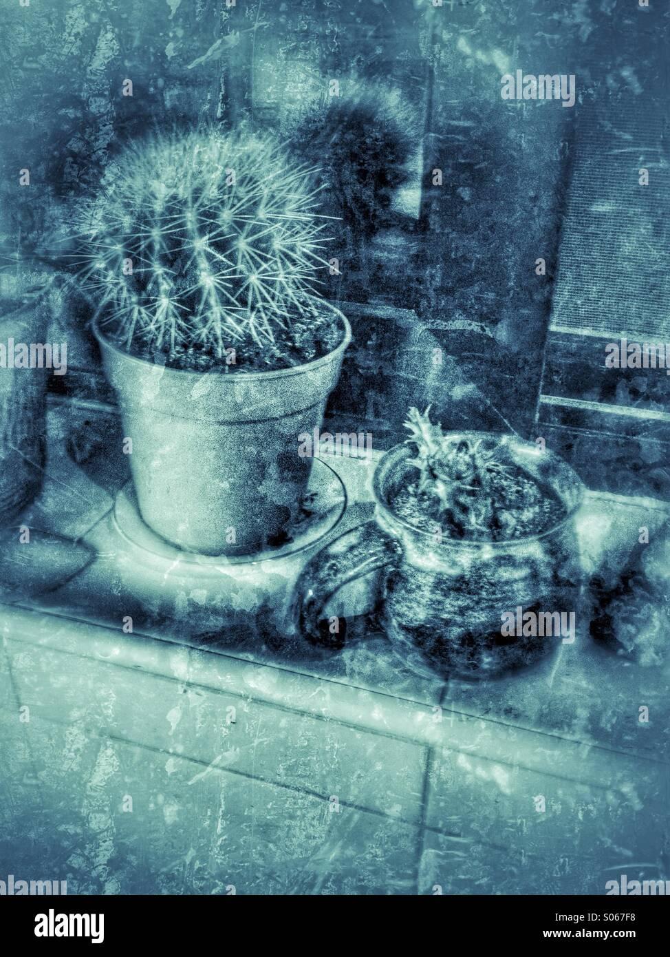Cactus cuisine sur un rebord de fenêtre Photo Stock