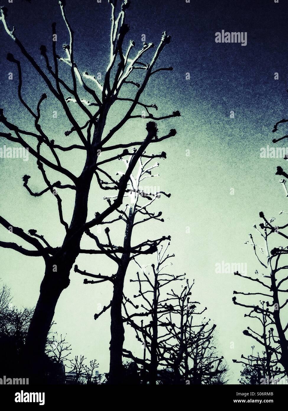 Rangée d'arbres avec des branches dénudées Photo Stock