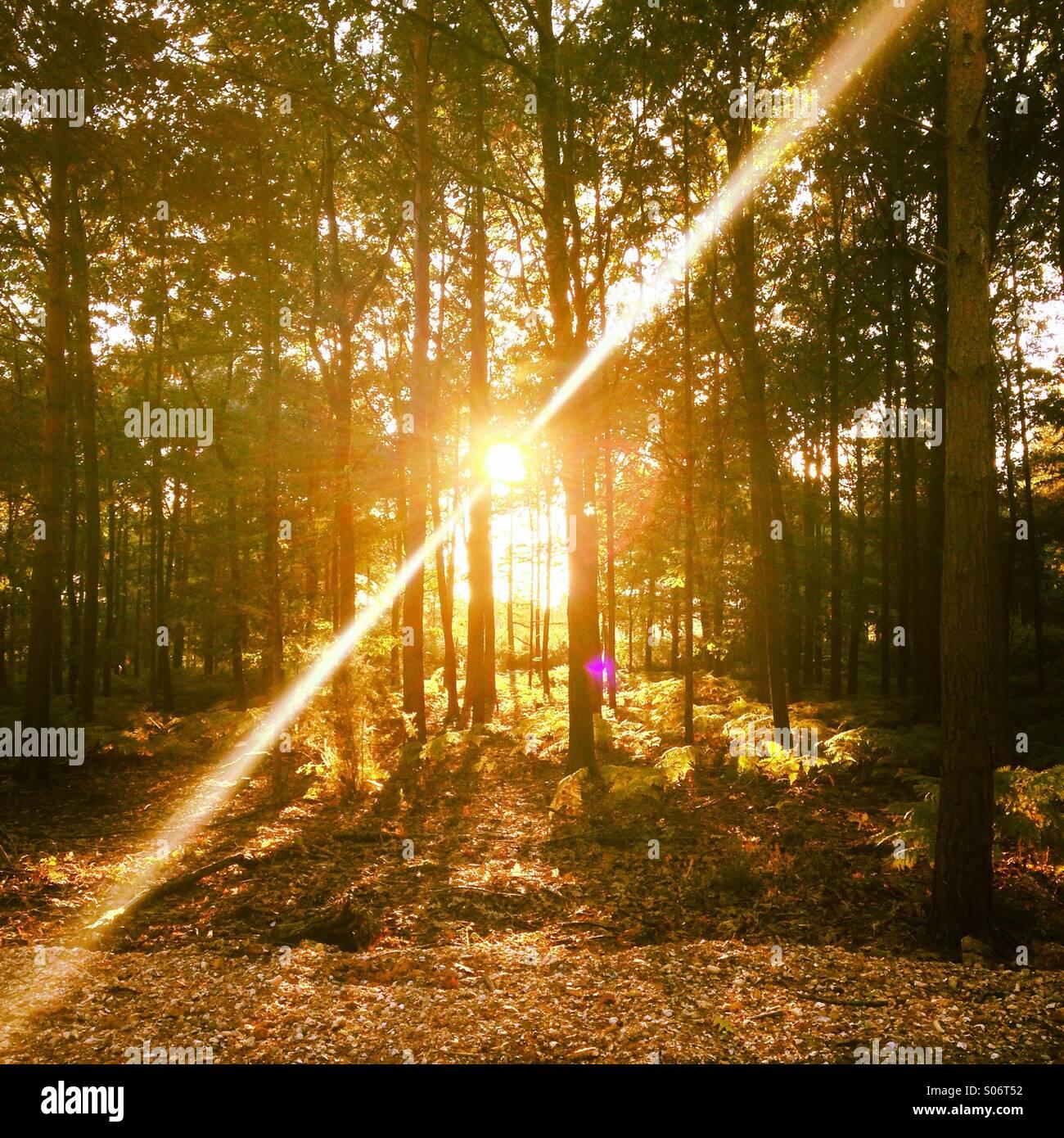 La lumière du soleil à travers les arbres Photo Stock