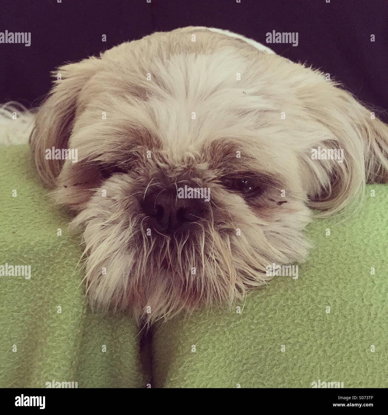 Une vie de chiens Photo Stock