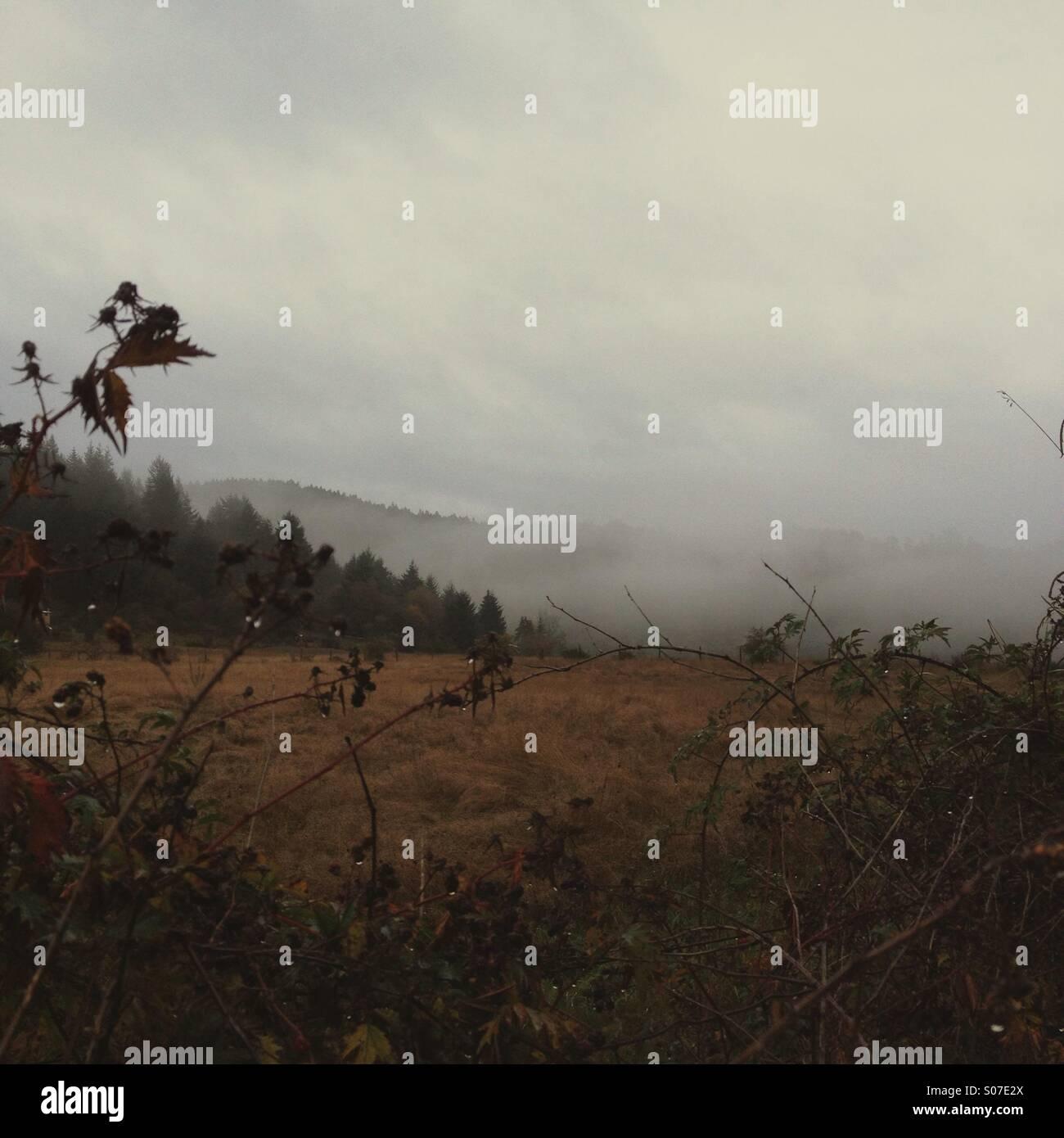 La pluie brouillard humide avec champ de mûriers en premier plan à l'automne. Photo Stock