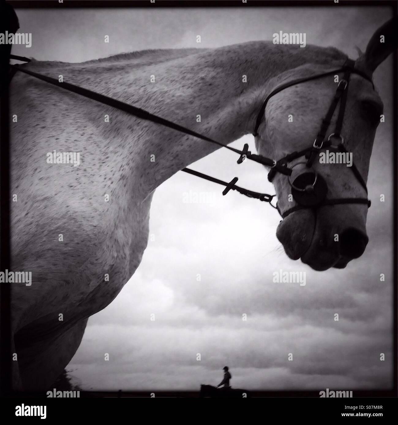 Randonnées à cheval Photo Stock