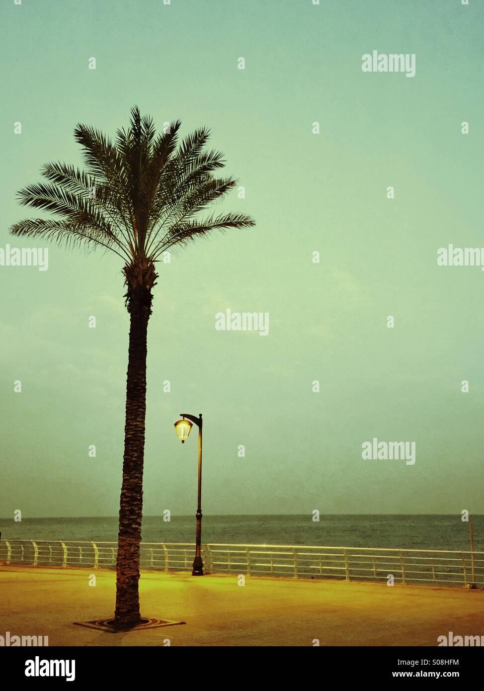 Palmier par la mer Méditerranée Beyrouth Liban Photo Stock