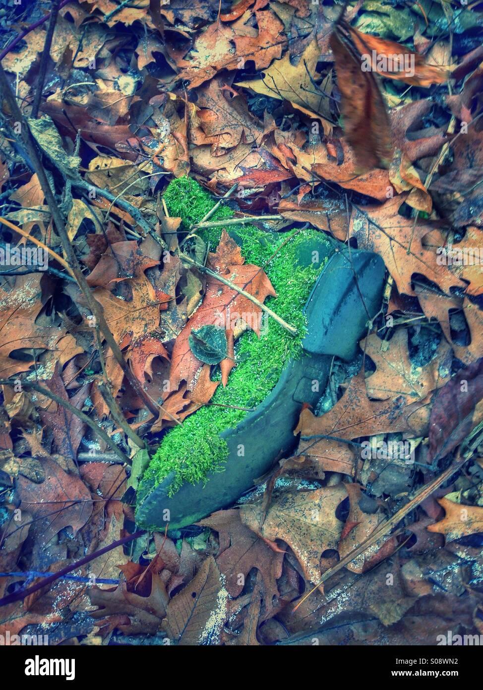 Vieux boot moussu dans les feuilles. Photo Stock