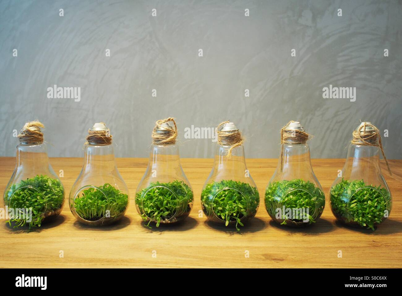 Plantes de l'ampoule. Photo Stock