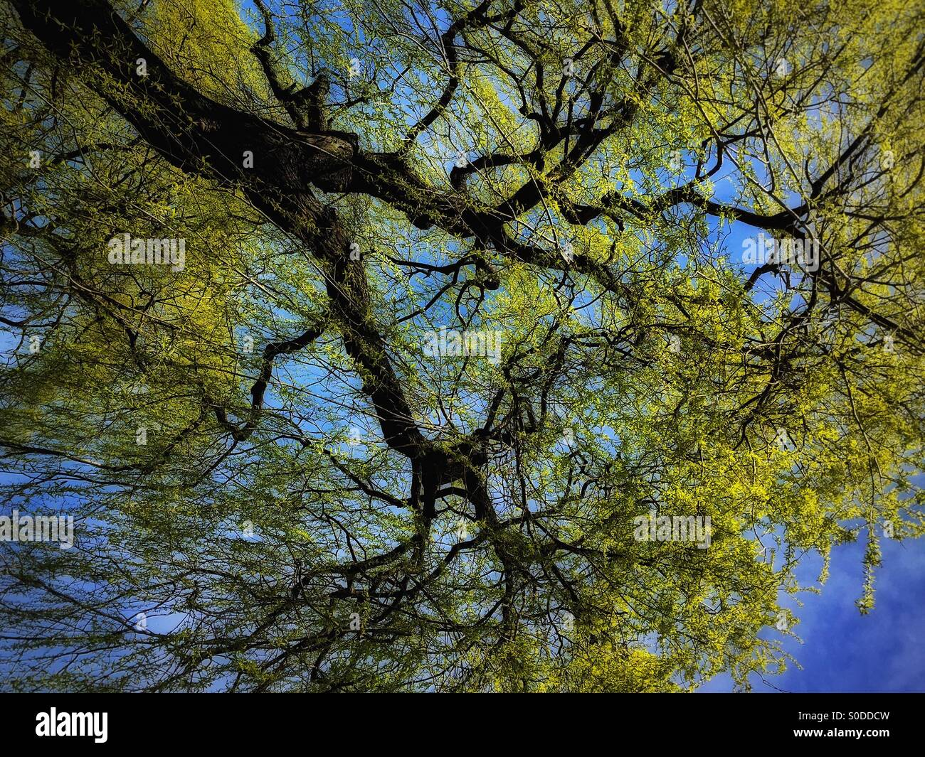 Contexte de printemps Photo Stock