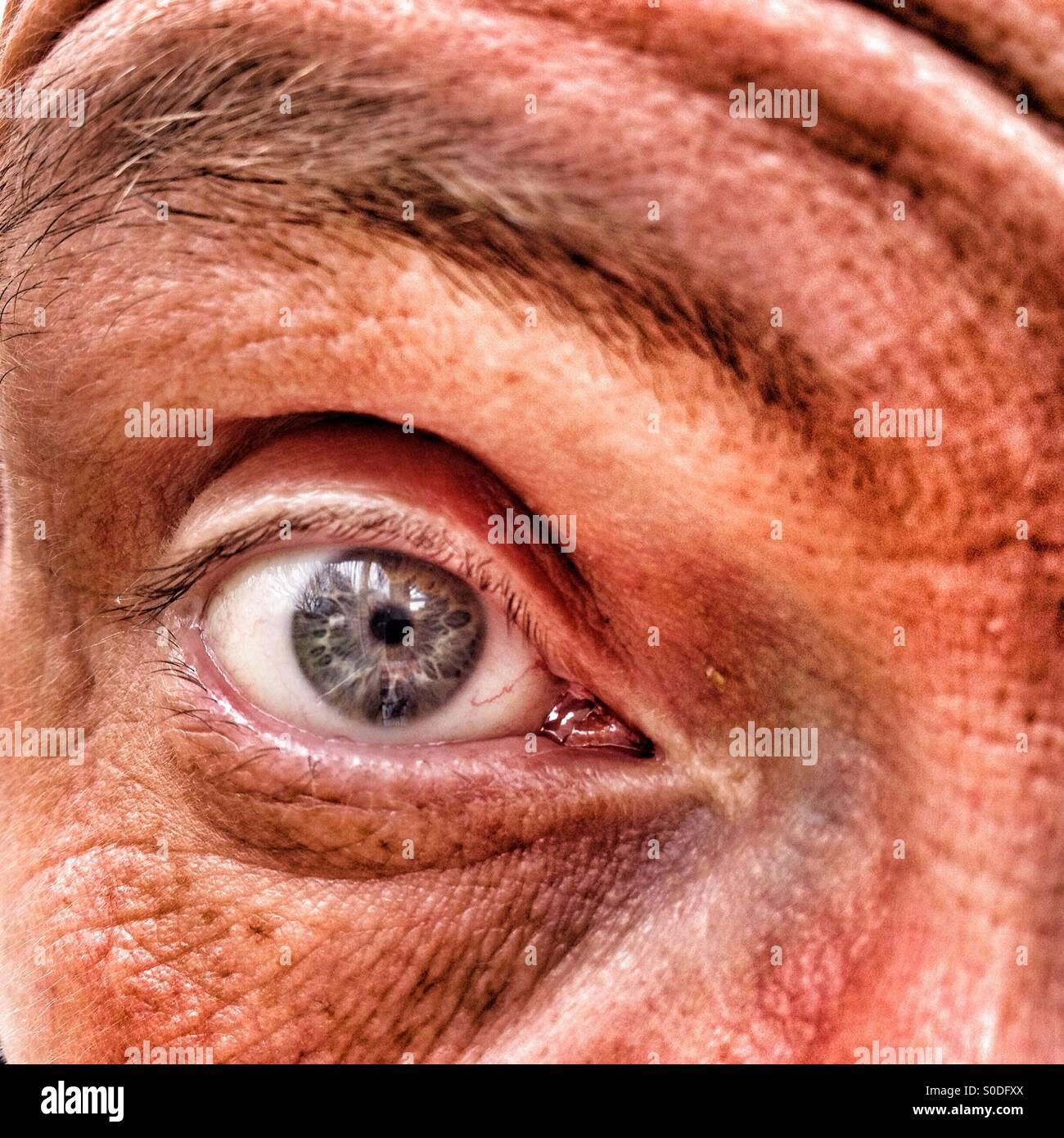 Close up de mâles adultes eye Photo Stock