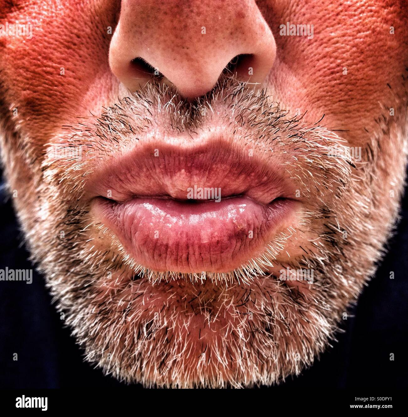 Mâle adulte avec soufflage barbe kiss Photo Stock