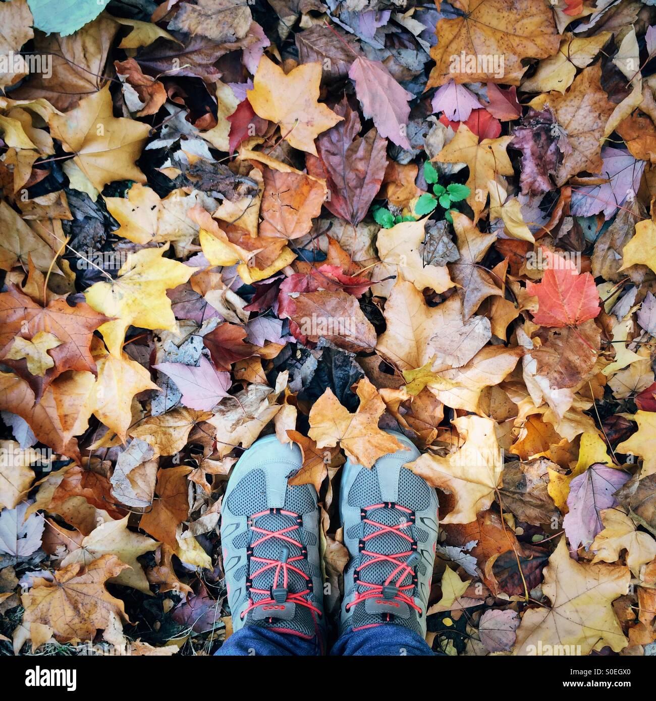Pieds avec des chaussures de randonnée se tenant sur le sol avec les feuilles d'automne Photo Stock