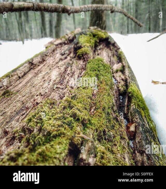 Moss en hiver Banque D'Images