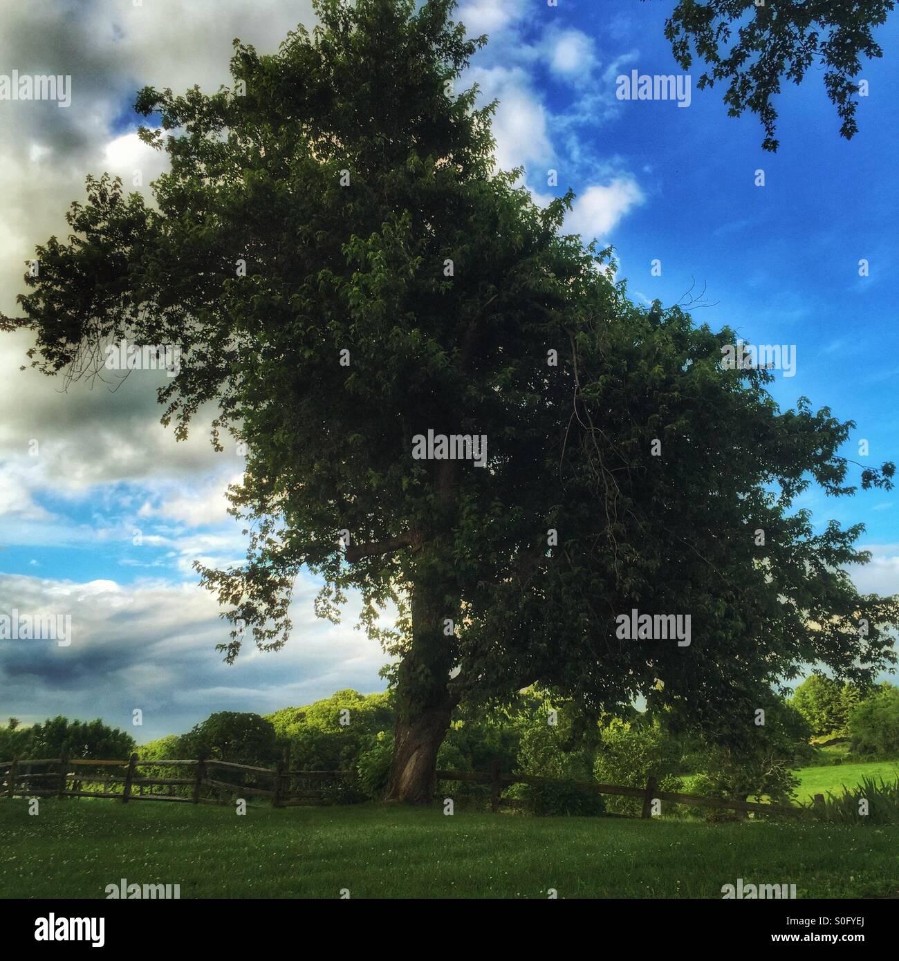 La ferme de Crooked Tree Banque D'Images