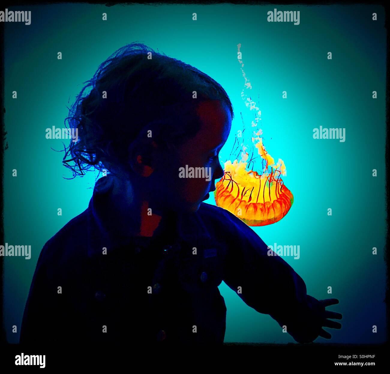 Tout-petit silhouette sur le réservoir de méduses Photo Stock