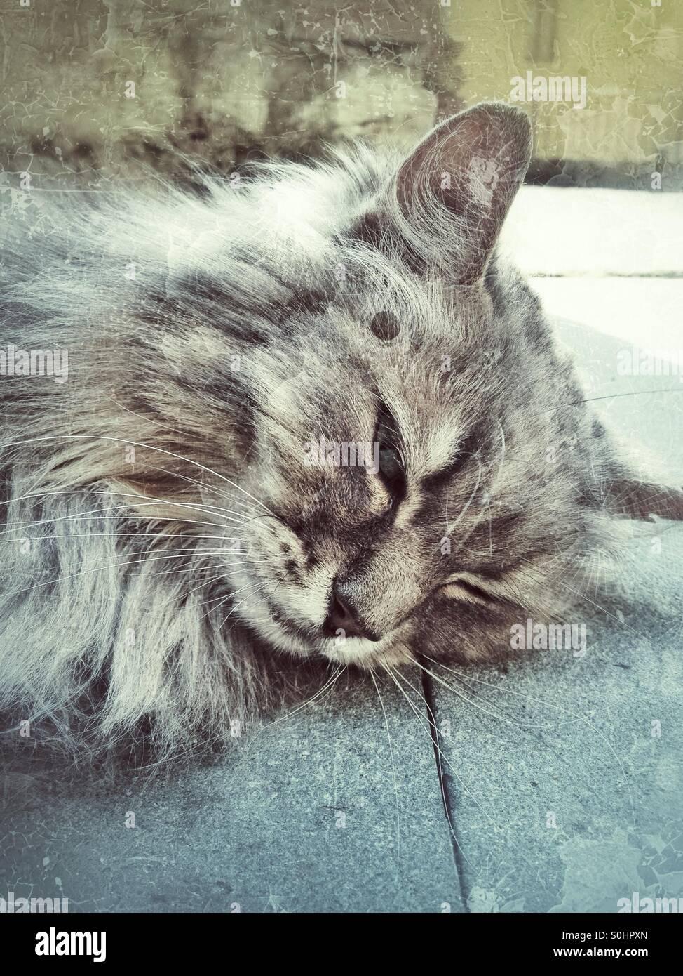 Endormie de chat paresseuse Photo Stock