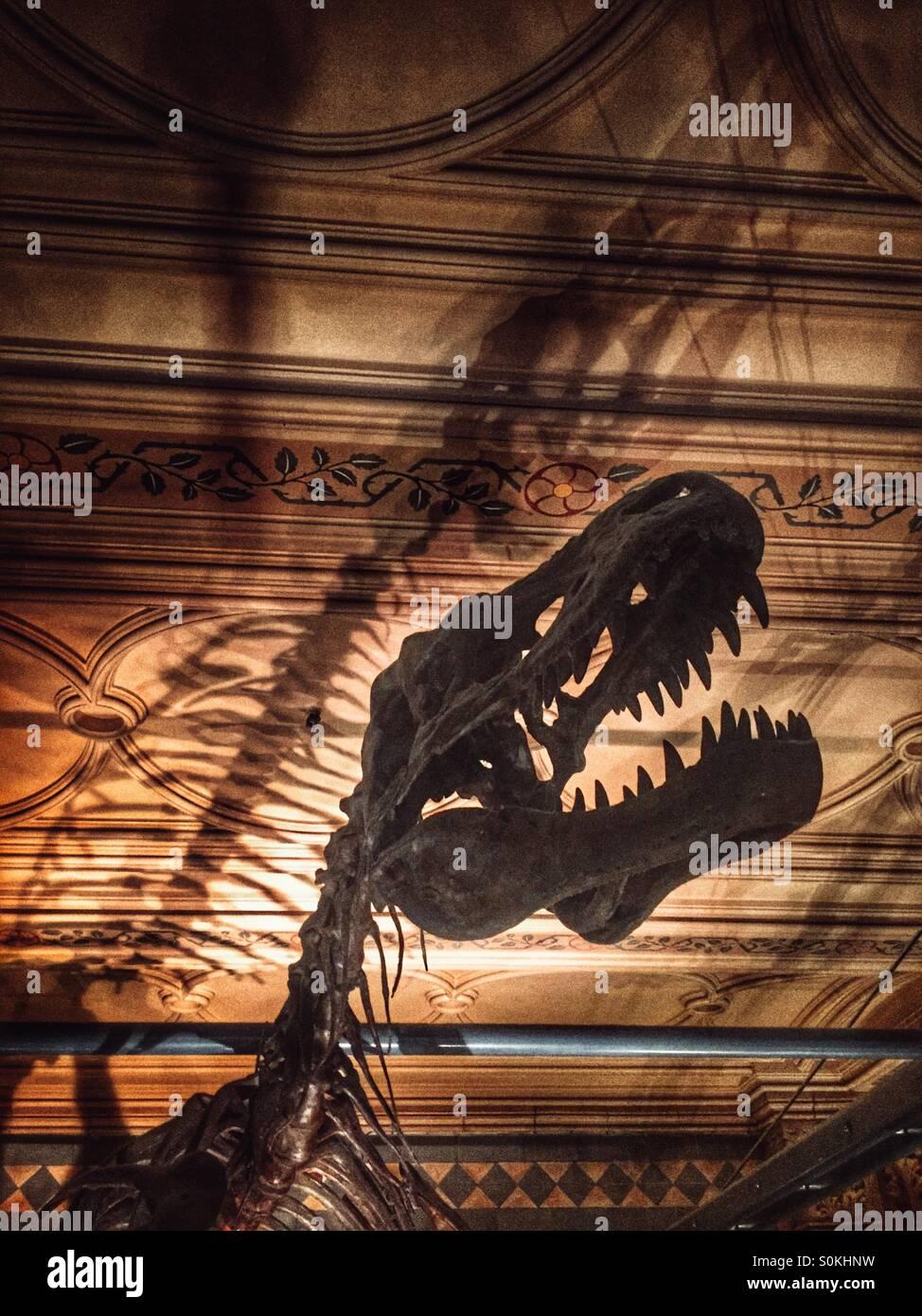 Dinosaure, au Natural History Museum de Londres Photo Stock