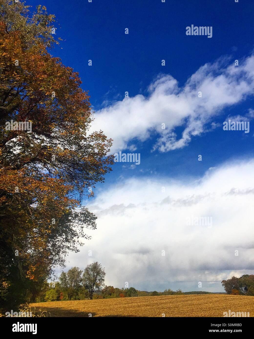 Journée d'automne Banque D'Images
