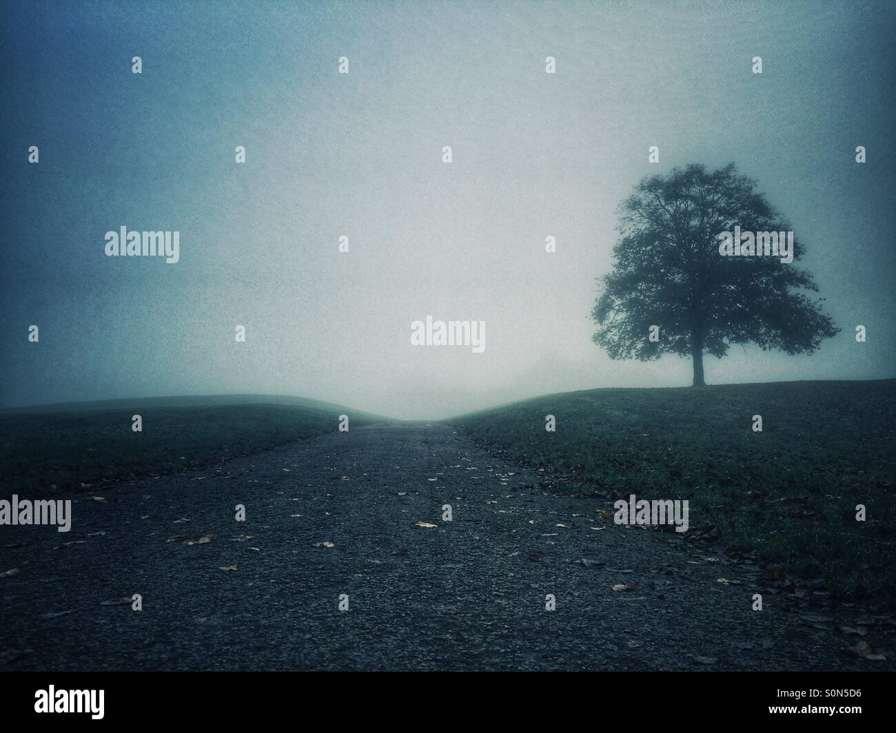 Arbre sur la colline Photo Stock