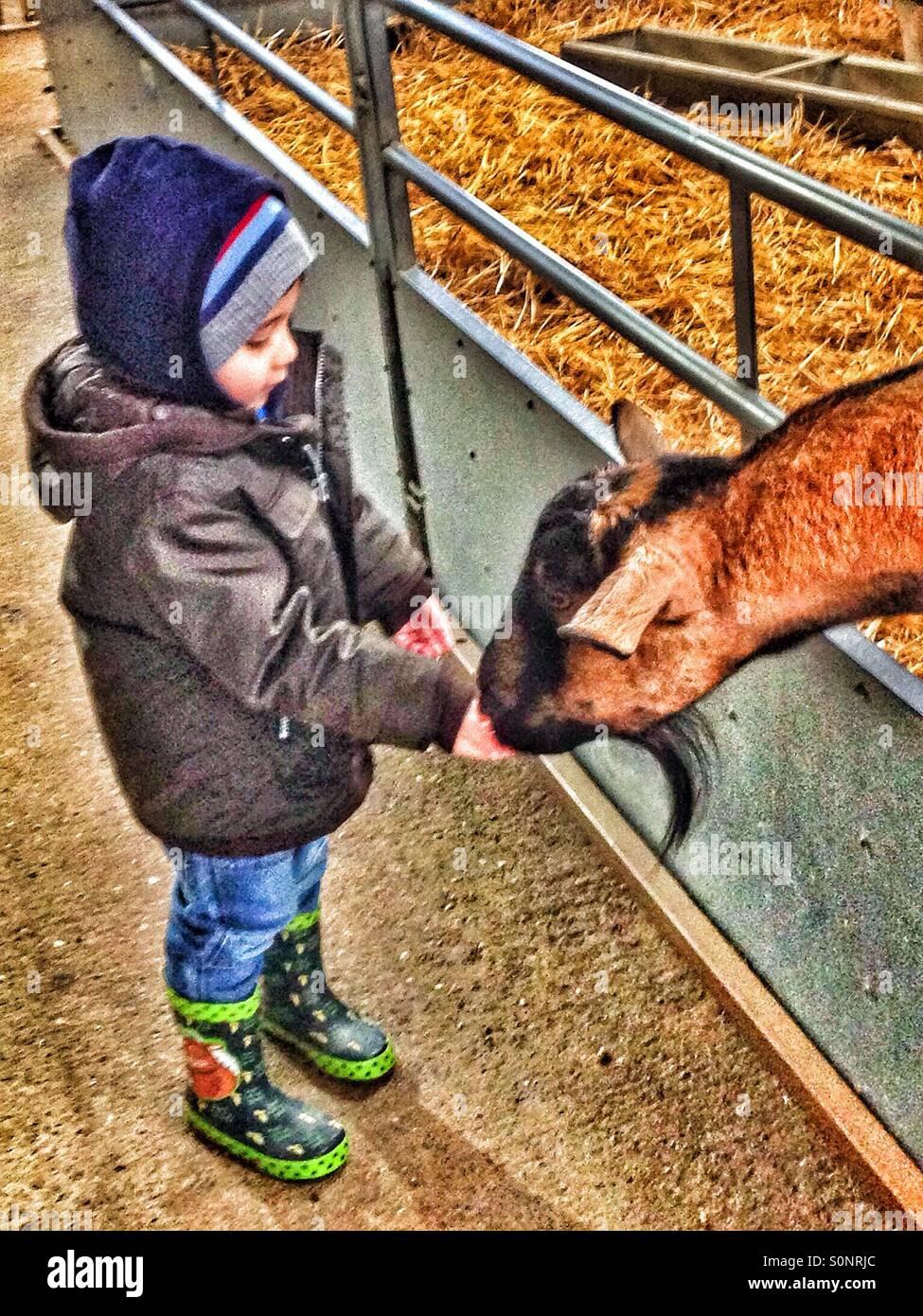 Jeune garçon l'alimentation d'une chèvre. Photo Stock