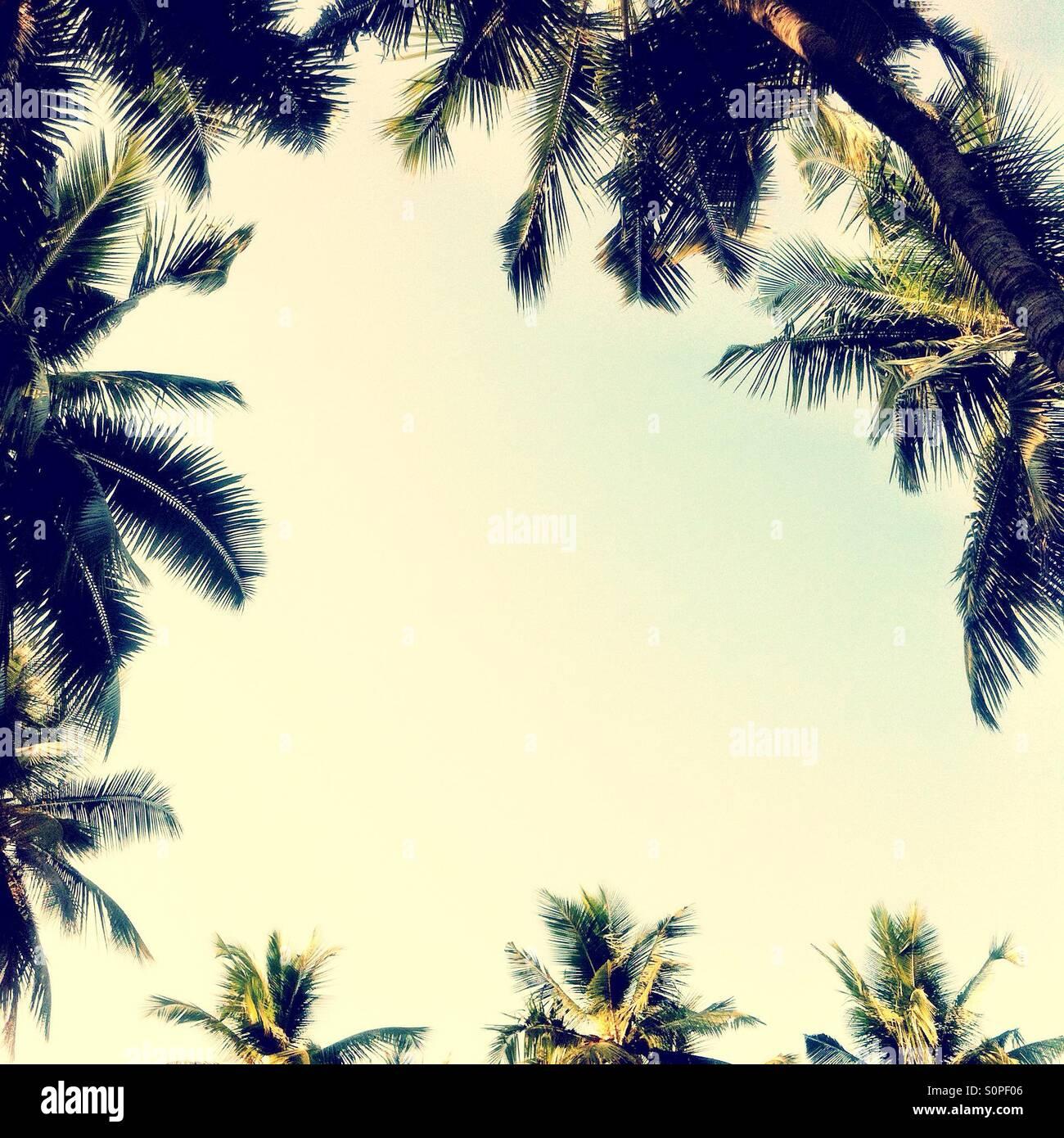 Palmiers entourant une zone de ciel bleu Photo Stock