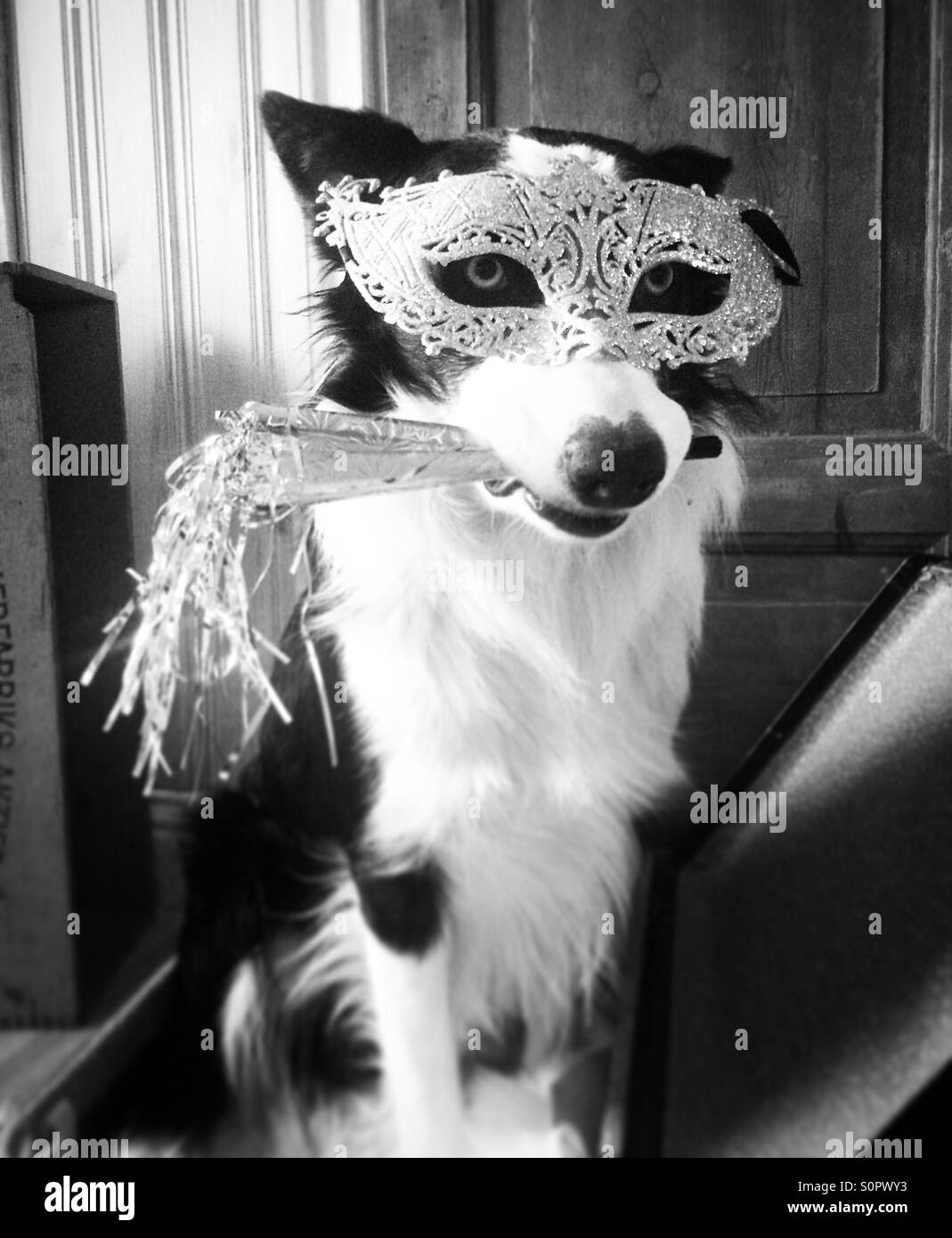 Bonne année! Photo Stock