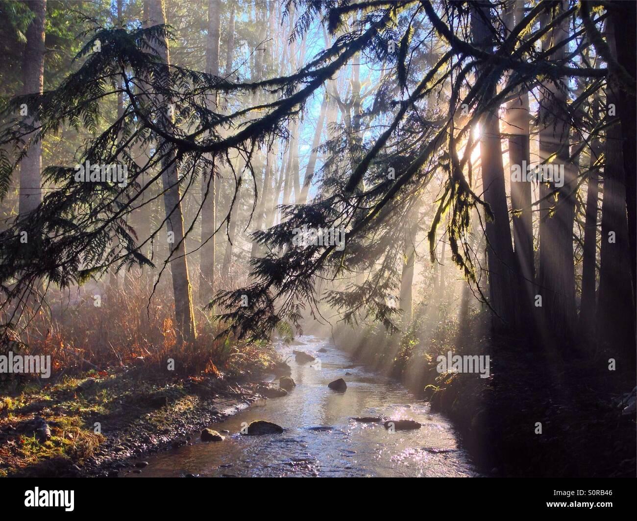 Un ruisseau dans la forêt avec des rayons solaires venant à travers le brouillard. Photo Stock
