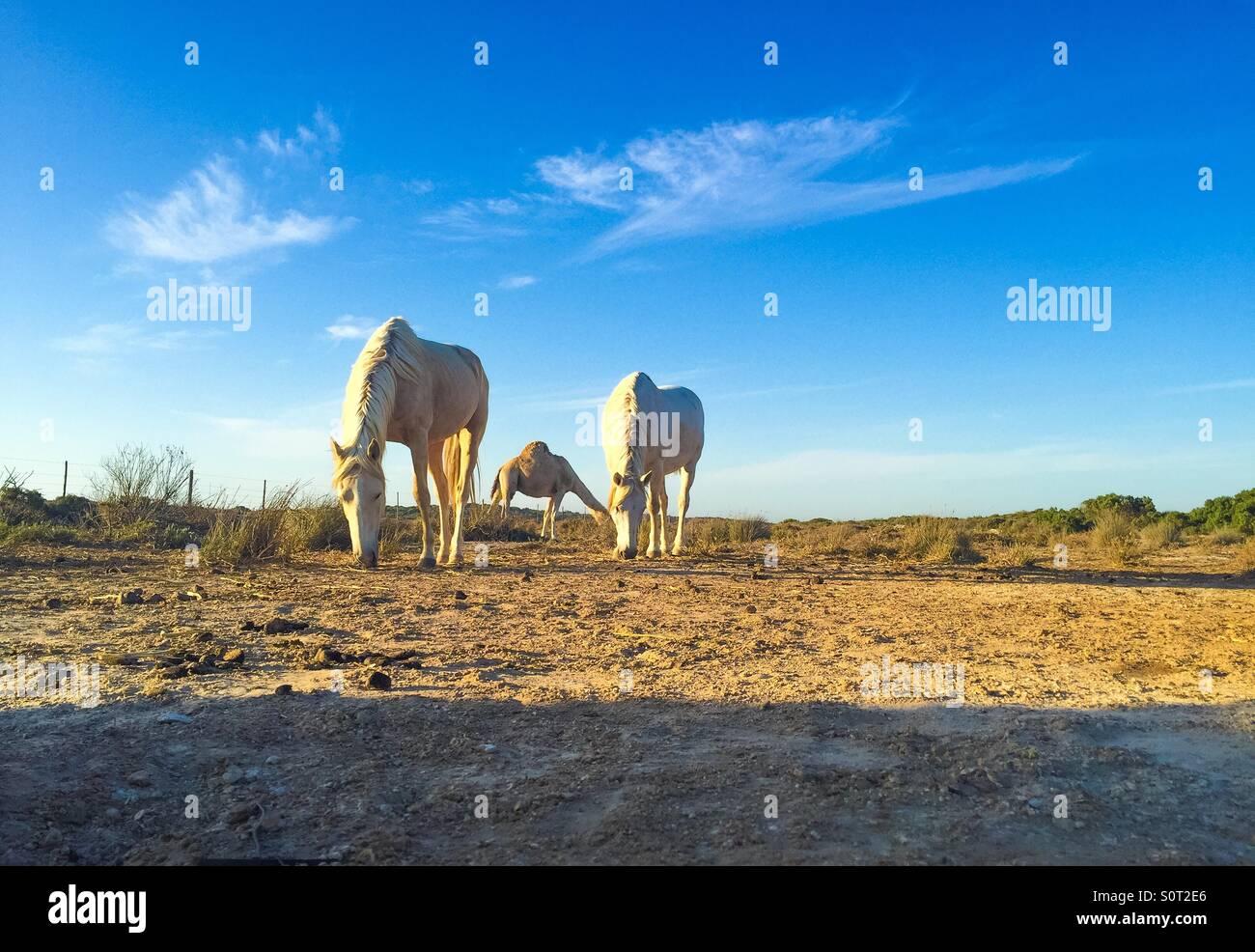 Promenade dans la nature Photo Stock
