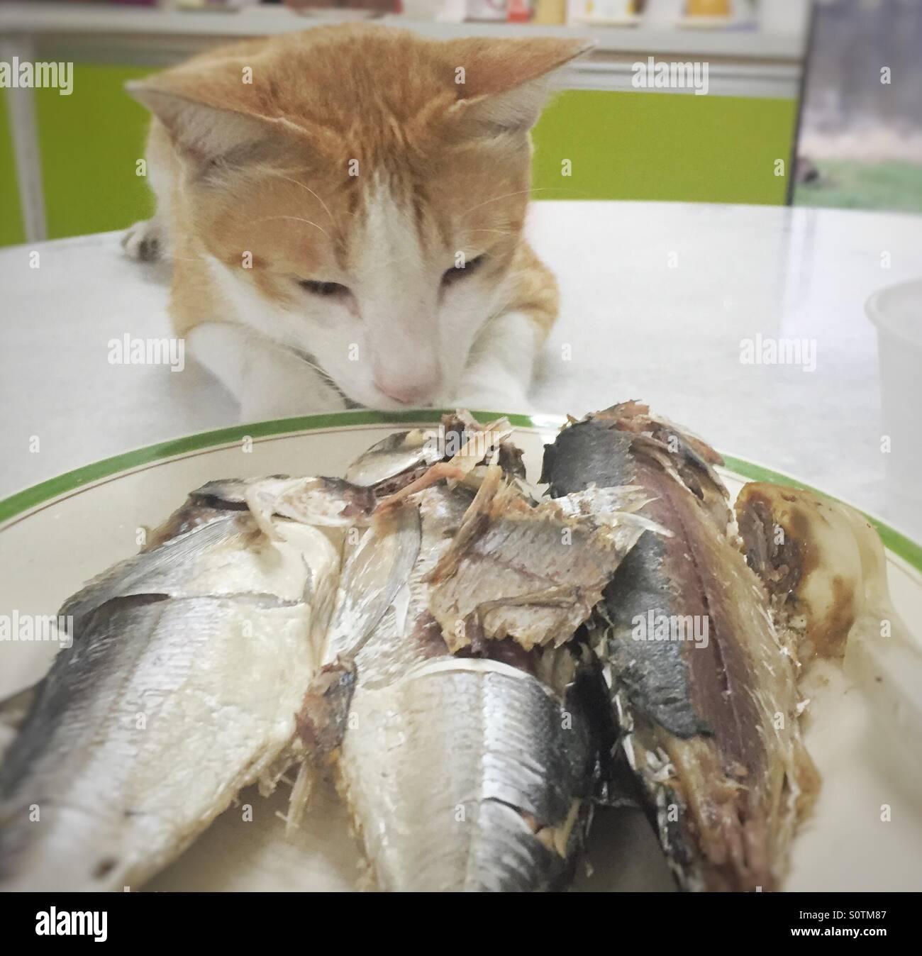Chat et poisson Banque D'Images