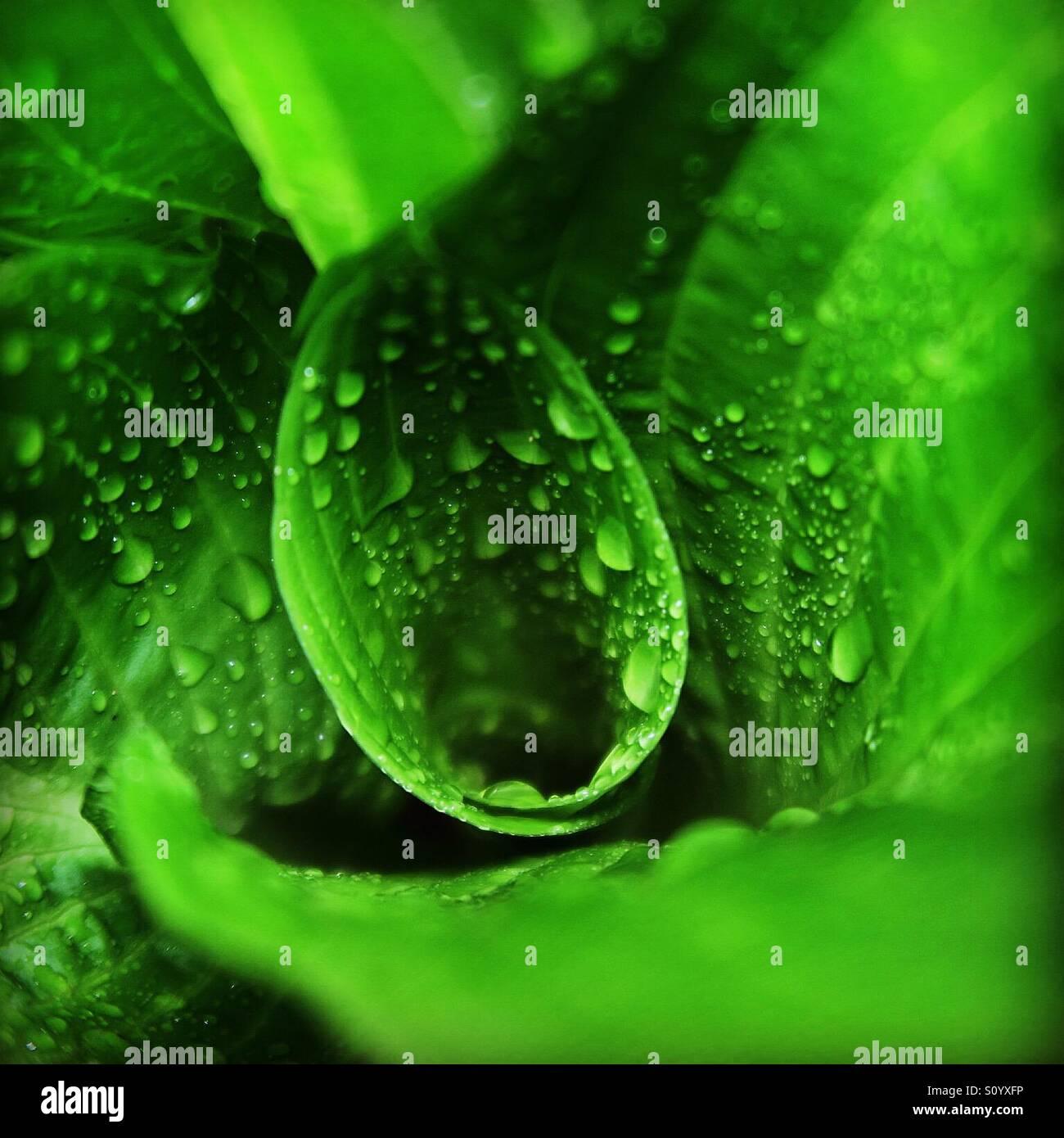 Plante verte avec des gouttes de pluie Photo Stock