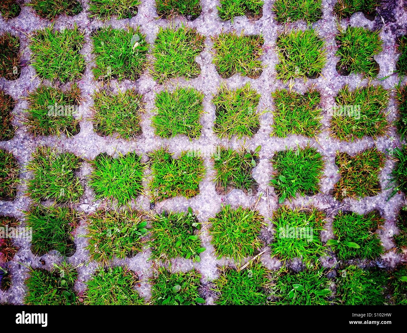Grassy places Photo Stock
