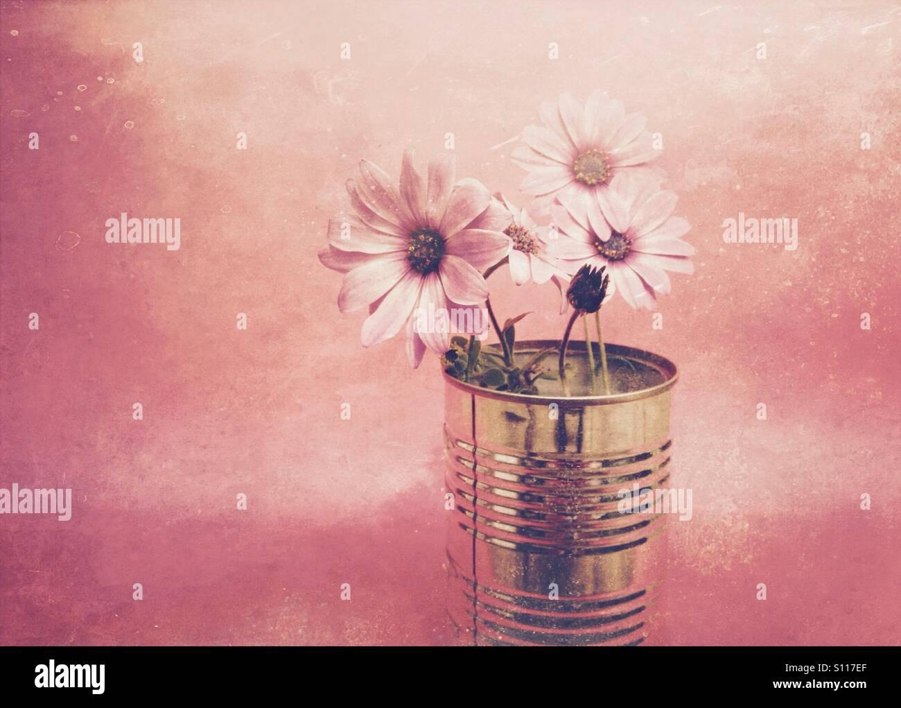 Fleurs Daisy avec un filtre de couleur appliqué Banque D'Images
