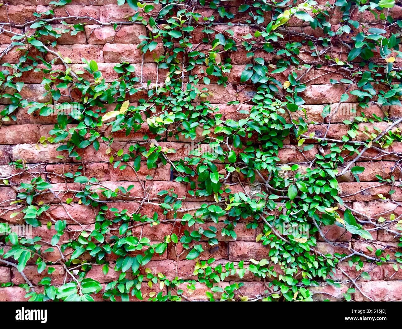 Mur épineuse Photo Stock