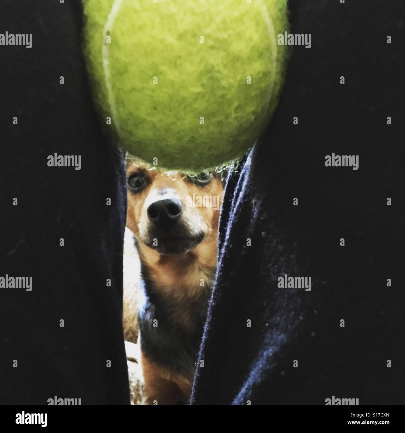 Obsession de la balle Photo Stock