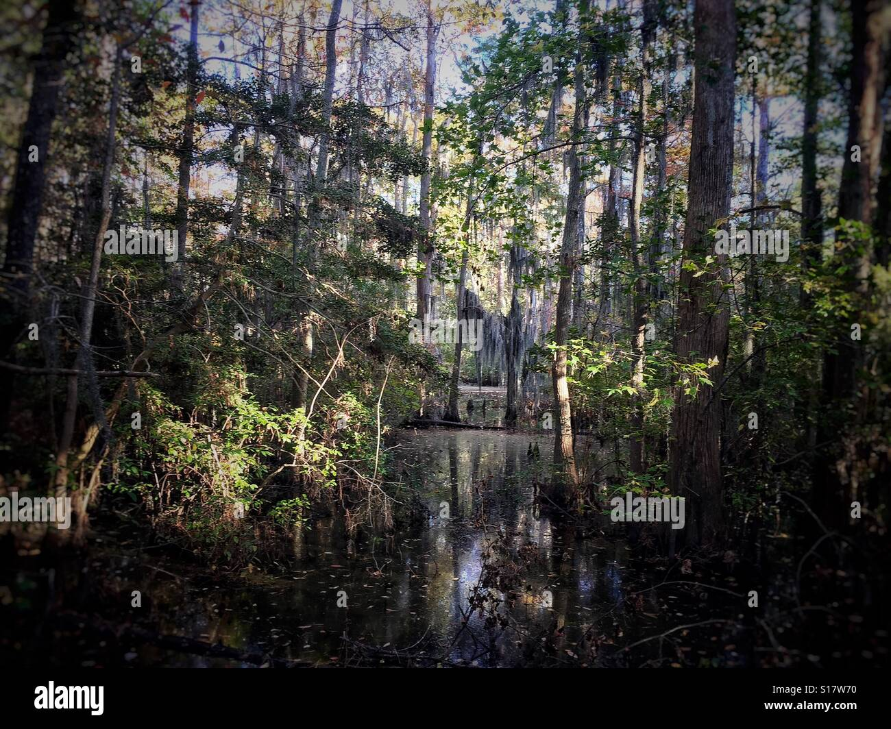Swamp à première Landing State Park Banque D'Images
