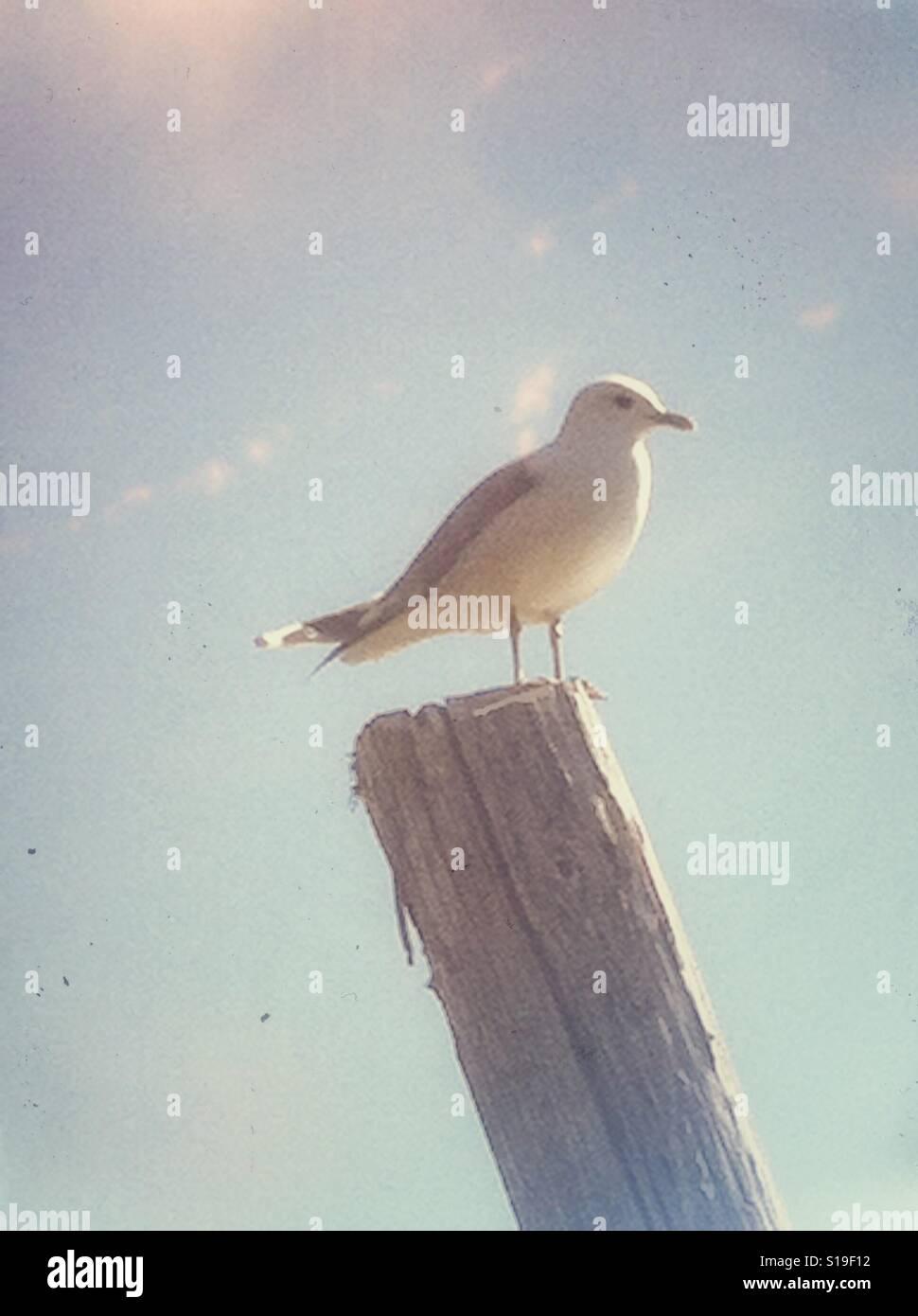 Seagull assis sur un poteau Banque D'Images