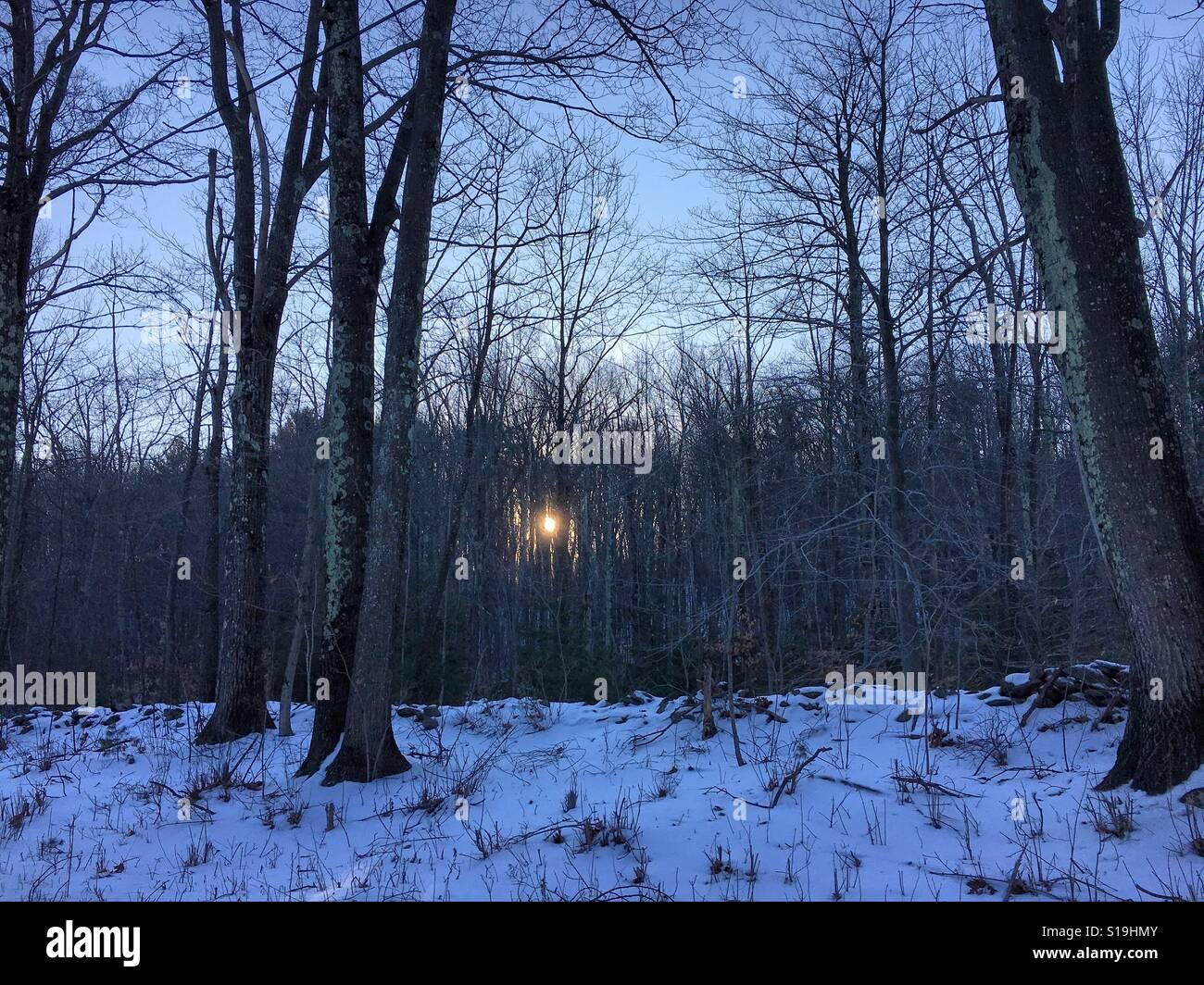 Coucher du soleil à travers la forêt pendant l hiver dans l ouest du  Massachusetts. Tourné dans la ville de sandisfield dans les Berkshires. 8bac1c4083d