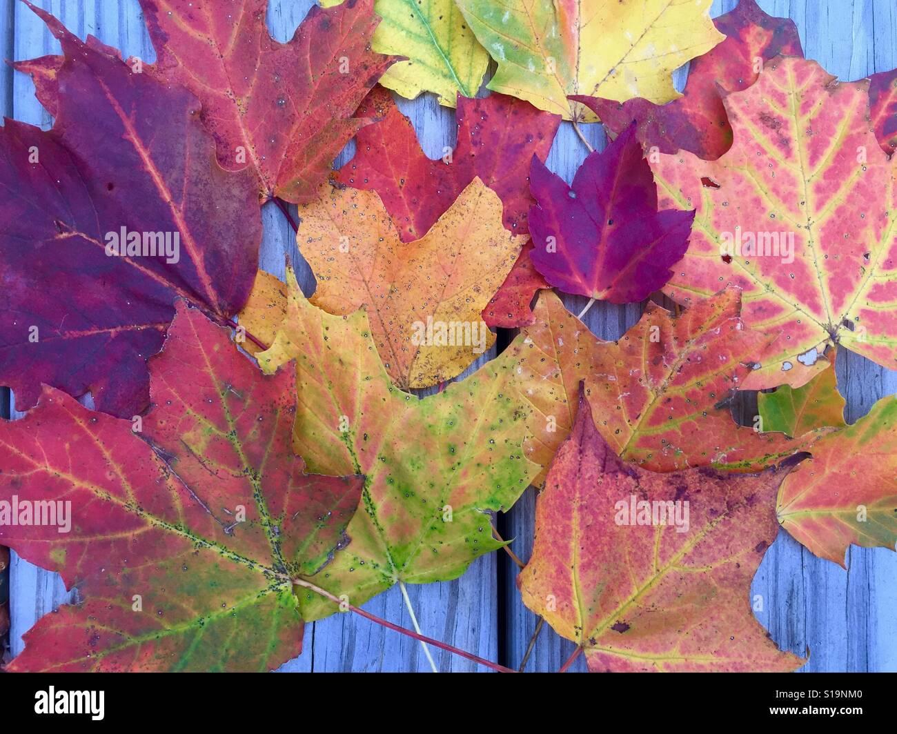 Motif de feuilles d'automne Banque D'Images