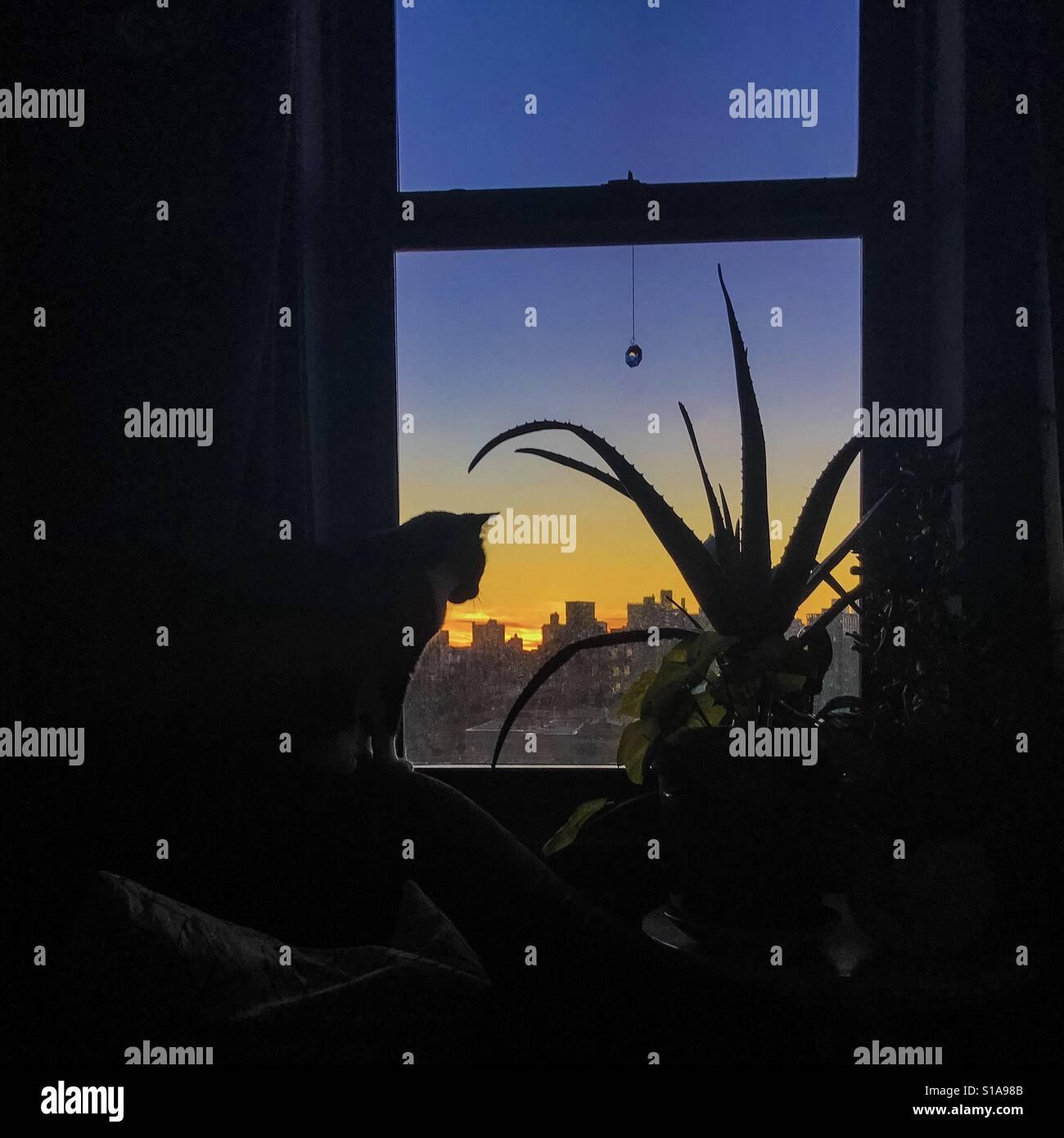 Chat dans la fenêtre Banque D'Images