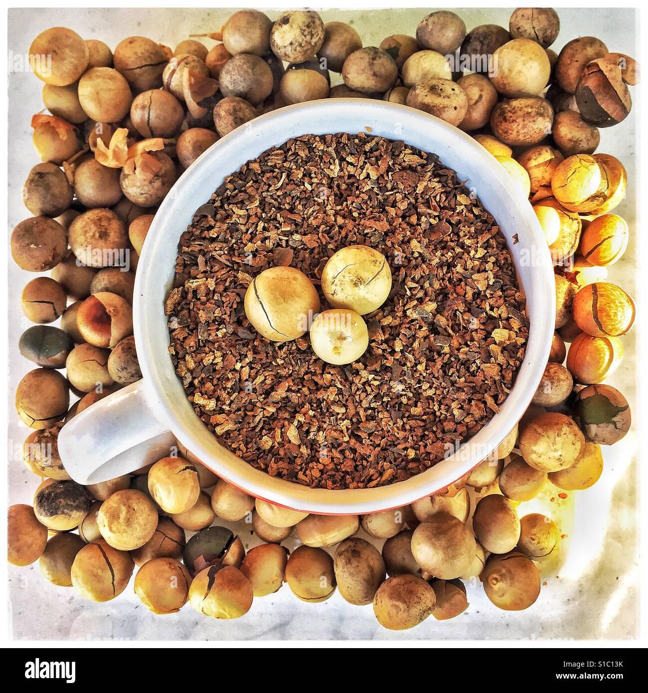 Capomo, également connu sous le nom de graines ou noix Maya Maya est torréfié et masse pour un délicieux Photo Stock